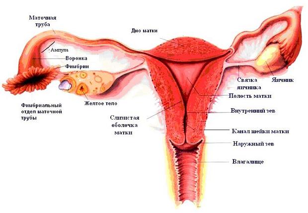 Ускладнення позаматкової вагітності - розрив фаллопієвій труби.