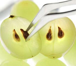 Масло виноградної кісточки використовується вже кілька століть