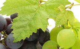 Калорійність винограду вважається досить високою