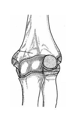Анатомія ліктьового суглоба